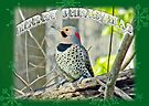 Christmas Card    Yellow-Shafted Flicker by MotherNature