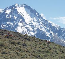 Guanaco with Mountain (Chile) by SkiCC