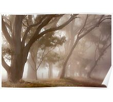 Covered in fog - Anakie Poster