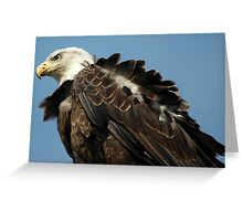 Alaskan Bald Eagle Greeting Card
