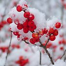 SNOW ON BERRIES by ArizonaSunday
