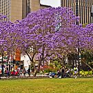 Jacarandas At The Quay by TonyCrehan