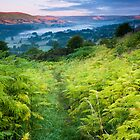 Ferns and Mist by johnfinney