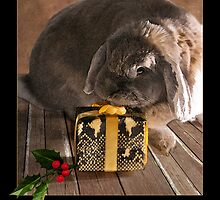 A Rabbit's Intriguing Present by Photolucid