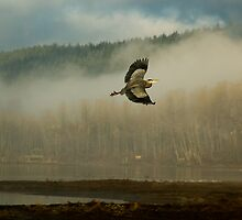 Heron Over Burrard Inlet by Tracy Riddell