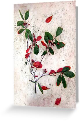 Red Berries Christmas Card by LouiseK
