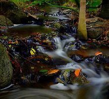 Natures Colours  by KeepsakesPhotography Michael Rowley