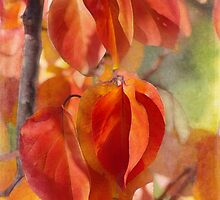 apricot autumn by Teresa Pople