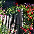 Cottage fence  by BronReid