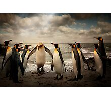 Penguins at the beach Photographic Print