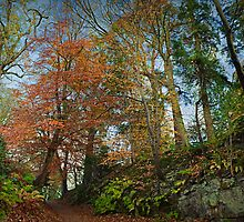 An autumnal walk by Gillian Cross