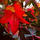 Autumn Leaves by Steve Purnell