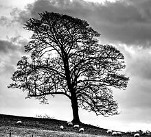Just A Tree by David J Knight