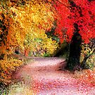 Autumn Trail II by copper4000