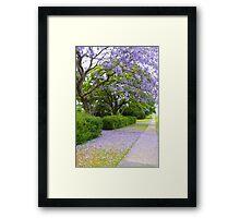 Jacaranda  Framed Print