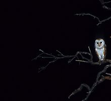 Silent Hunter - Barn Owl by naturalnomad