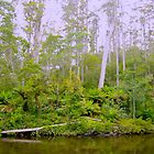 Arthur River, Tasmanian North West Coast by wearehouse
