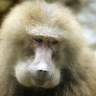 Baboon Beauty (2) by cullodenmist