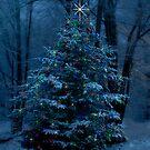 O Christmas Tree by Megan Noble