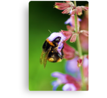 For The Love Of Nectar.... Canvas Print