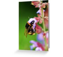For The Love Of Nectar.... Greeting Card