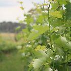 On the grape vine... by Christine Oakley