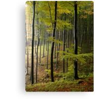 Autumn in Vienna forest. II Canvas Print