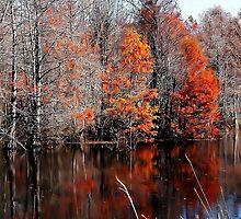 Late November by RickDavis