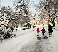 Sledding Central Park by andykazie