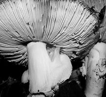 fabulous funky fungi b&w by dedmanshootn