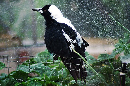 Morning Shower by Eve Parry