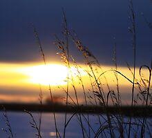 Grassy Sunset by Alyce Taylor