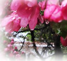 Raindrops by Alyce Taylor