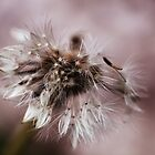 Dandelion In Monochrone by Evita