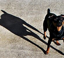 Taz and His Shadow by DionNelson