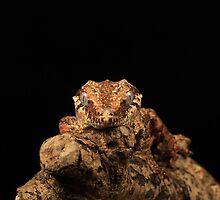 Gargoyle Lizard by nikkihinton