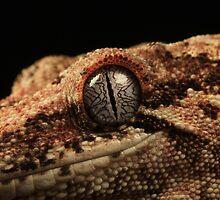 Gargoyle Lizard Eye by nikkihinton