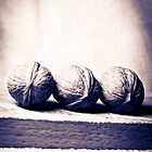 Three wallnut on a tea towel in black and white by Patrizia  Corriero