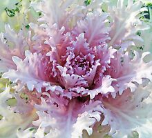 Pastel Decorative Kale - The Autumn Garden's Friend 2 by MotherNature