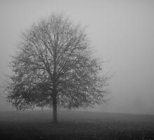 Hampton Common in Fog by Kasia Nowak