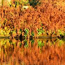 Reflections of the Fall by Steve