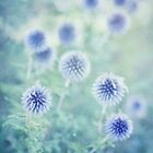 thistle dreams by Priska Wettstein