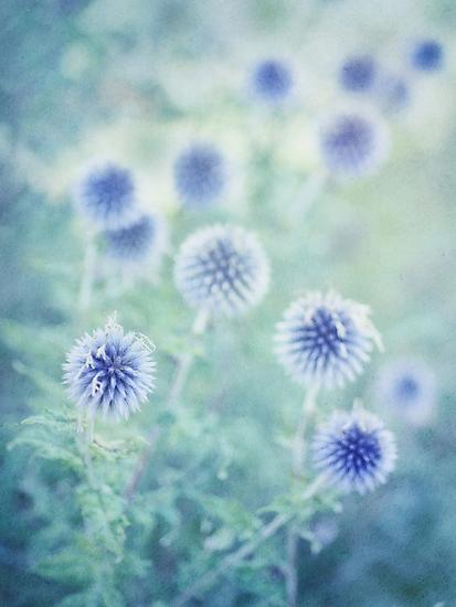 thistle dreams by Priska Wettstein