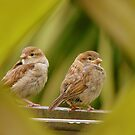 That&#x27;s A Very Strange Eye Looking At Us.. - Sparrow Fledglings - NZ by AndreaEL