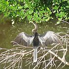 Egret Sunning Himself by miriamcb