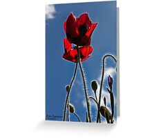 Poppies in the Afternoon Greeting Card