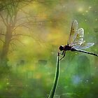 Dragonfly in the Cemetery by Karen Kilgallin