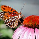 Gulf Fritillary On A Cone Flower by Kathy Baccari