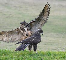 Eagle Owl attack by karlwilsonphoto