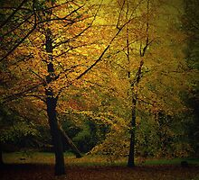 Golden Autumn Colours by dawnandchris